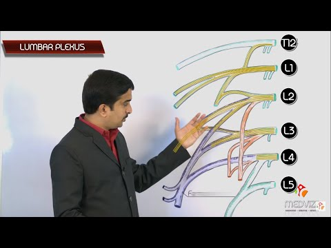 The Lumbar Plexus  - USMLE Gross Anatomy , Dr G Bhanu Prakash