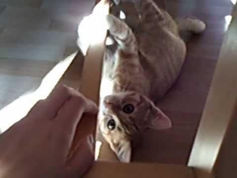 Cute Cat - Lia ♥ 2