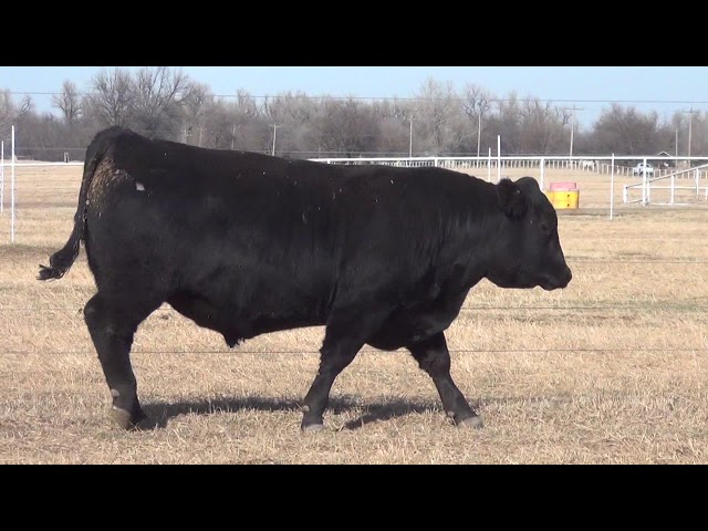 Express Ranches Lot 46