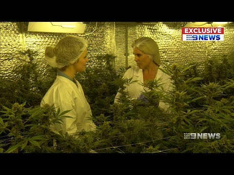 Inside WA's Medical Cannabis Facility | 9 News Perth