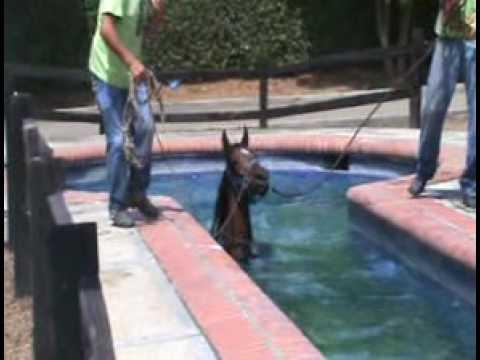 Trabajo en piscina youtube for Dimensiones de albercas