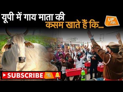 यूपी में गाय माता की कसम खाते हैं कि... | UP Tak