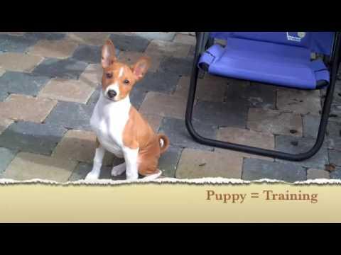 David the Dog Trainer: Puppy Walking