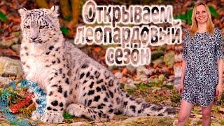 Открываем леопардовый сезон! Леопардовое платье-рубашка. Между нами, девочки. (КТ №39)
