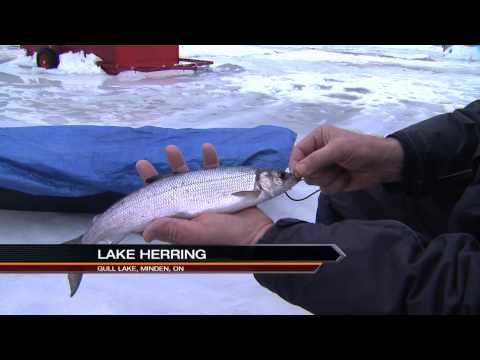 Ice Fishing For Lake Herring, Minden Ontario Part 1 Of 4