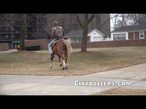How to Ride a Horse in the City of Detroit