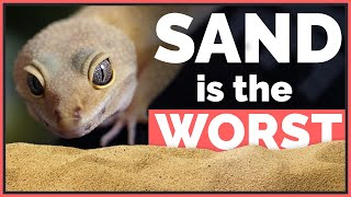 Why Sand is the Worst Pet Reptile Substrate (with 10 Common Arguments)