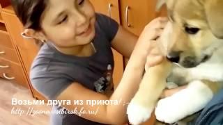 Счастливое усыновление котенка и щенка из приюта Дари добро | Едем домой