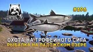 Охота на Трофейного Сига Рыбалка на Ладожском озере Русская Рыбалка 4 196