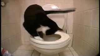 Кот в ванной.