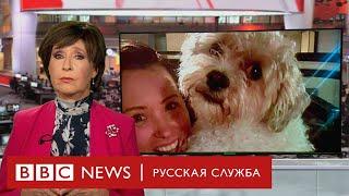 Верните Блейка! Соцсети воссоединили украденного пса с хозяйкой