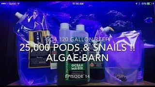 SCA 120 Gallon Reef Tank | Ep.14 | Algae Barn - 25,000 PODS & Snails !!!