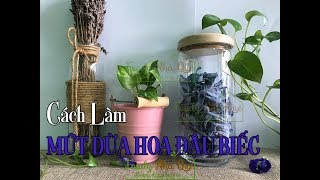 CÁCH LÀM MỨT DỪA HOA ĐẬU BIẾC - How To Make Coconut Jam With Pea Flowers