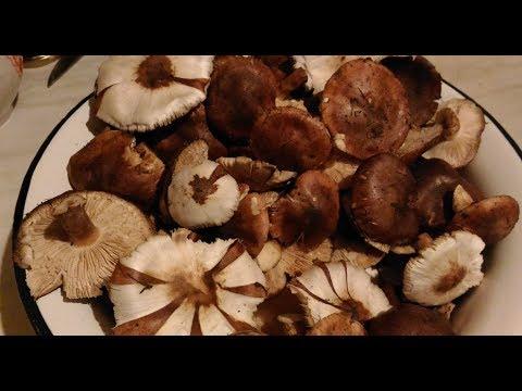Как убрать горечь из грибов при жарке