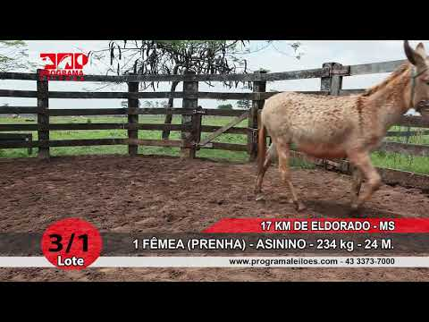 LOTE 03 1
