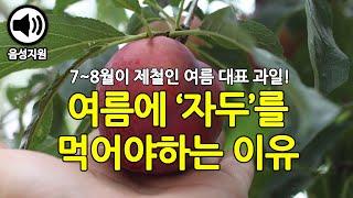 여름철 대표 과일, 자두의 효능과 부작용