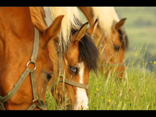 Rancho Texas ( Posadaa Górna) ;PP Travel Video
