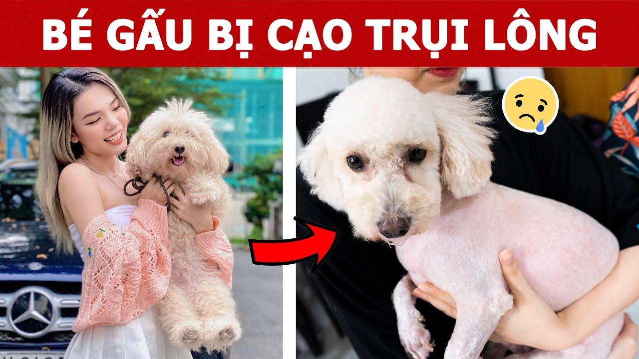 Bé Gấu Bị Cạo Trụi Lông | Oops Banana Vlog 292