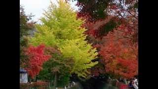 http://westk.info/ 紅葉が始まっていますね。河口湖紅葉まつりは 11月3...