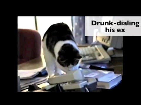 Meet The Oreo Cat. from YouTube · Duration:  1 minutes 32 seconds