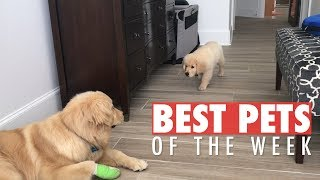 Best Pets of the Week | November 2018 Week 3