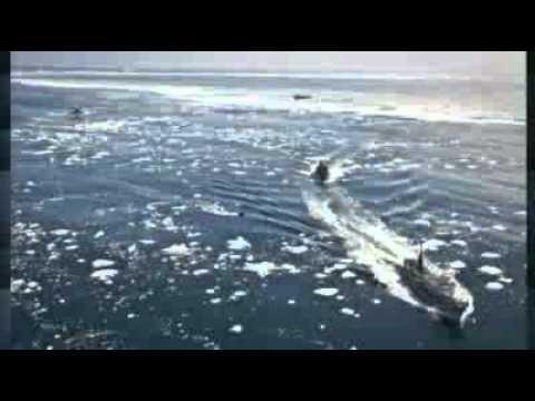 Whaling clash during Antarctic hunt
