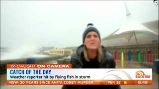 Reporter hit in head by flying fish during weather report    #sun7 WMV V9