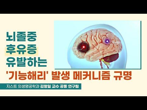 뇌졸중 후유증 유발하는 '기능해리' 발생 메커니즘 규명_지스트 의생명공학과 김형일 교수 연구팀