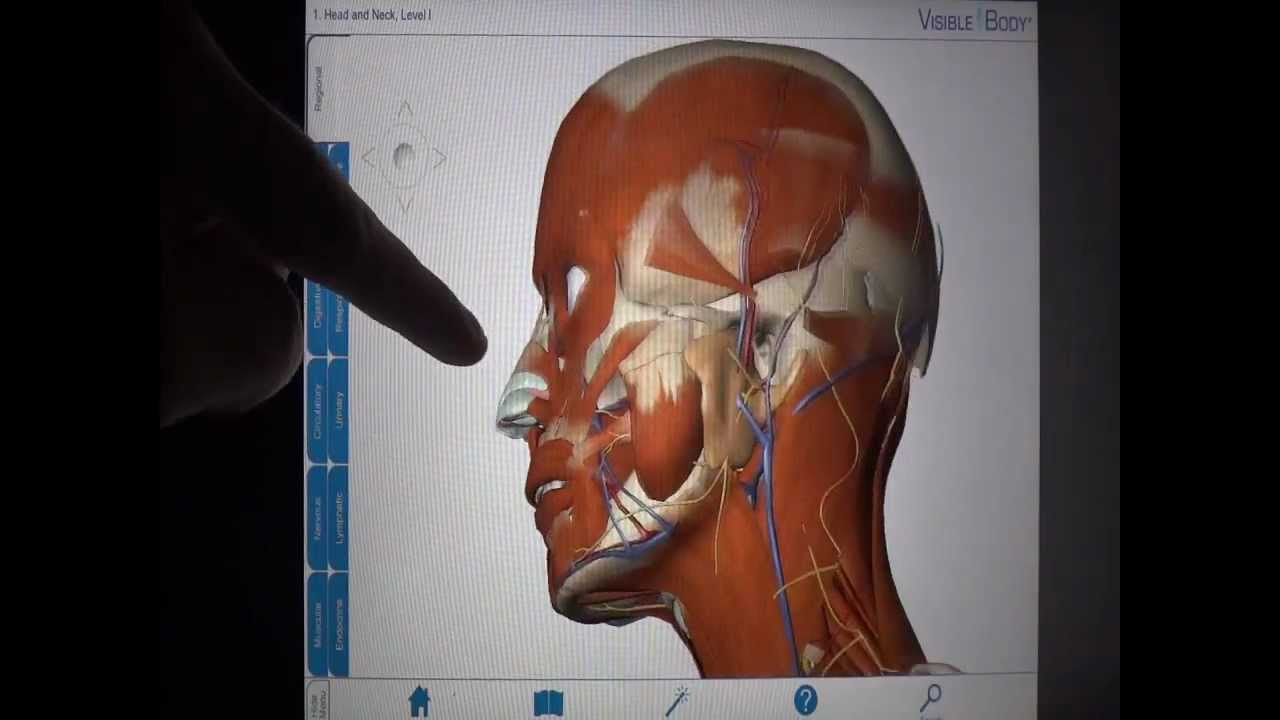 Educational App Tutorial Visible Body 3d Human Anatomy Youtube