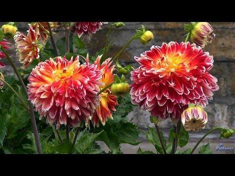 фото цветов из ботанического сада