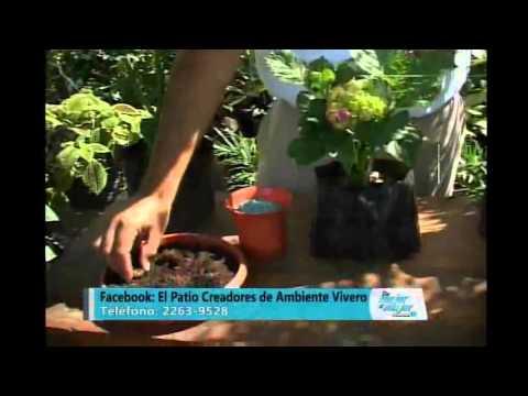 El jardinero en casa hortensias doovi - Cuidado de las hortensias ...