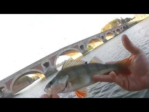 ça mord pas sur la Garonne?va sur le canal:Pêche urbaine Toulouse
