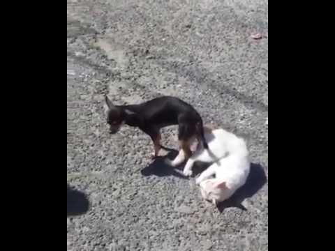 cat dog crossing - gato y perro union (extra�o comportamiento animal 2017)