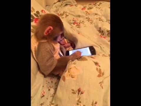 Monkey play smartphone