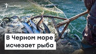 В Черном море исчезает рыба | Доброе утро, Крым