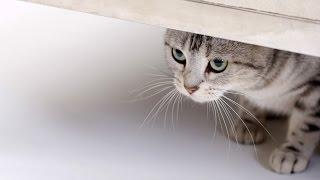 Я обиделась, прикольное видео про кошек(Домашние животные любят нас искренне и бесхитростно. Но если обиделись или просто хотят уединиться, то..., 2015-08-13T12:56:54.000Z)