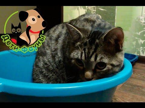 Кот стал гадить. Почему кот стал гадить? Основные причины и что делать?