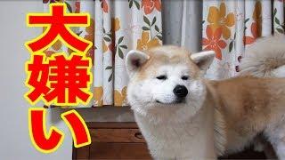 我が家の秋田犬 惣右介 シェパード犬マック君 掃除機が苦手ですね・・ ...