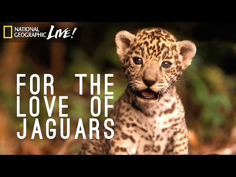 For the Love of Jaguars | Nat Geo Live