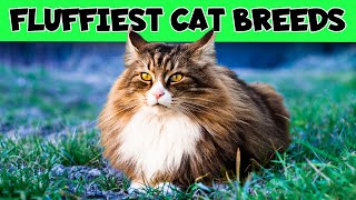 Fluffiest Cat Breeds In The World (From Largest to Smallest)