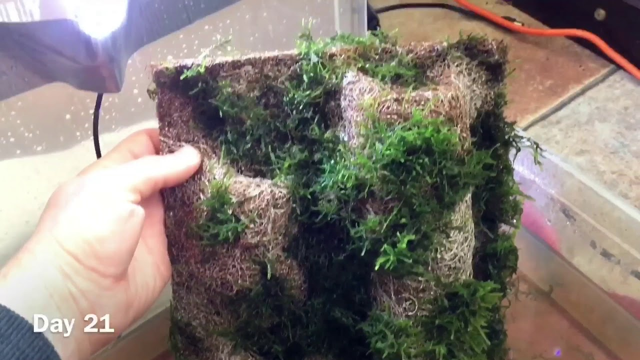 Moss Wall For Terrarium Vivarium