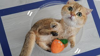 What Are You Looking At?   Funny Cats vs Tapes   Tricksy Pets