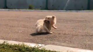 Very angry dog / Очень злой пес