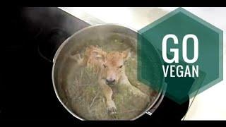 Я Vegan, Магнитная Аномалия - Я Больше Не Ем Животных