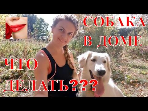 Вопрос: Как приучить собаку к лотку в взрослом возрасте?