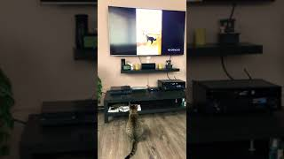 Funny cat watching cats compilation
