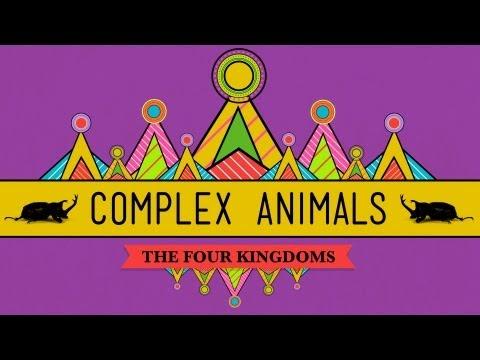 Complex Animals: Annelids & Arthropods - CrashCourse Biology #23