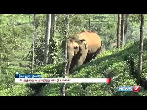 Elephant attacks govt bus in Nilgiris , none harmed | News7 Tamil
