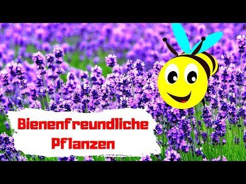 Bienenfreundliche Pflanzen Für Deinen Garten & Balkon 🔴 Top 5