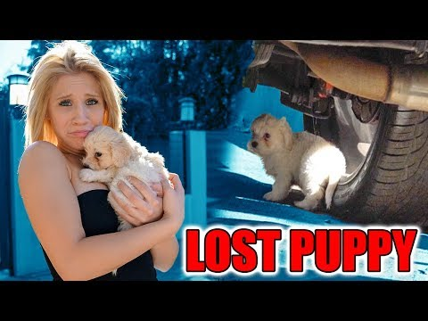 Thumbnail: WE RESCUED A LOST PUPPY! (FOUND UNDER CAR)